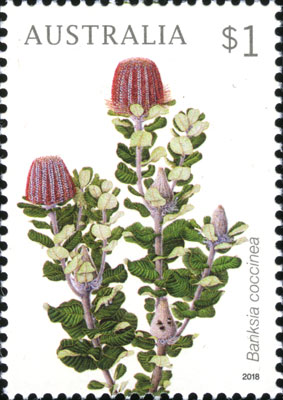 Banksia coccinea stamp painted by Celia Rosser